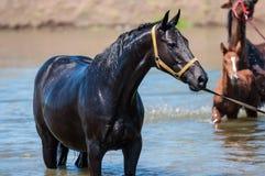 Pferde an einer Wasserentnahmestelle Stockfotografie