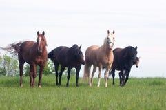 Pferde in einer Weide Lizenzfreies Stockbild