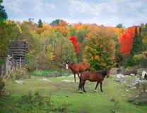 Pferde in felsigem Feld Herbst Lizenzfreie Stockfotografie