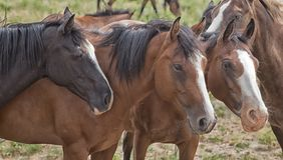 Pferde in gehört Stockbild