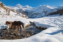 Pferde gehen, in einem bereiften Nebenfluss zu trinken Stockfotos