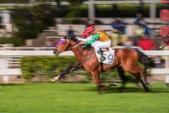 Pferde geritten von den Jockeys, die schnell während des Rennens laufen Bemühung zum Sieg Bewegung geverwischt, getontes horizont stockbild
