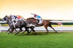 Pferde geritten von den Jockeys, die schnell während des Rennens laufen Bemühung zum Sieg Bewegung geverwischt, getontes horizont stockfoto