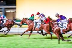 Pferde geritten von den Jockeys, die schnell während des Rennens laufen Bemühung zum Sieg Bewegung geverwischt, getontes horizont stockfotos