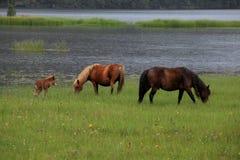 Pferde grasen in Shangri-La Lizenzfreie Stockfotos