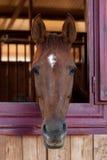 Pferde in ihrem Stall Lizenzfreie Stockfotos