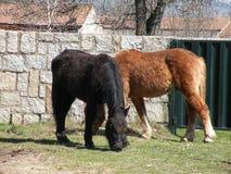 Pferde im Bauernhof Lizenzfreie Stockfotos