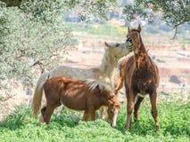 Pferde im Frühjahr 2 lizenzfreies stockfoto