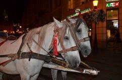 Pferde im Geschirr Stockfotos