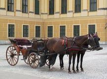 Pferde im Geschirr Lizenzfreie Stockfotos