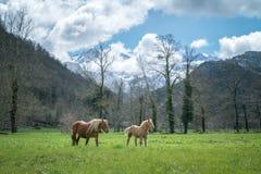 Pferde im Grasland lizenzfreies stockfoto