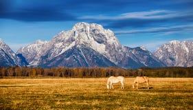 Pferde im großartigen Nationalpark Teton lizenzfreie stockbilder
