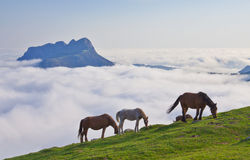 Pferde im natürlichen Park von Aiako Harriak. Stockfotos