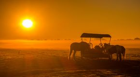 Pferde im Nebel lizenzfreies stockbild