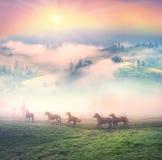 Pferde im Nebel an der Dämmerung Stockfotografie