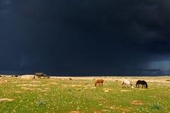 Pferde im Regen Stockbilder