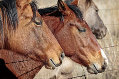 Pferde im Südwesten lizenzfreie stockfotografie