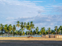 Pferde im Samara Lizenzfreies Stockfoto