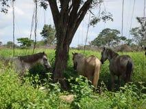 Pferde im Schatten Stockfoto
