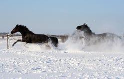 Pferde im Schnee Stockfotografie