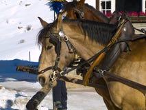 Pferde im Schnee Lizenzfreie Stockbilder