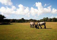Pferde im Sommer Lizenzfreies Stockfoto