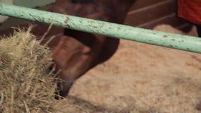 Pferde im Stall stock footage