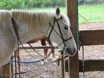 Pferde im Stall Stockfotografie
