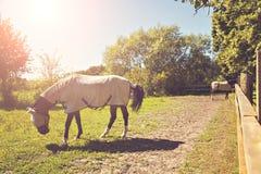 Pferde im Stift mit Steppdecken Lizenzfreie Stockfotos