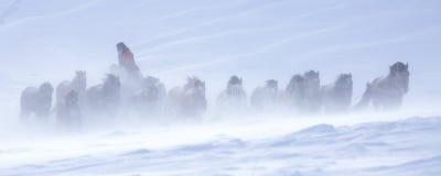Pferde im Sturm stockfoto