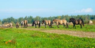 Pferde im Sumpfgebiet im Sommer stockfoto