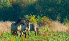 Pferde im Sumpfgebiet im Sommer stockfotos