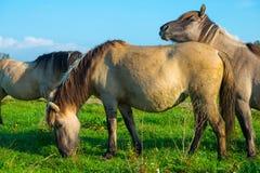 Pferde im Sumpfgebiet im Sommer lizenzfreie stockbilder
