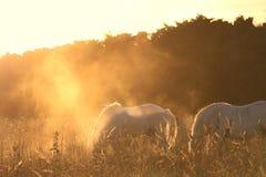 Pferde im surrealen Licht stockbild