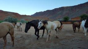 Pferde im Tal Lizenzfreie Stockfotos