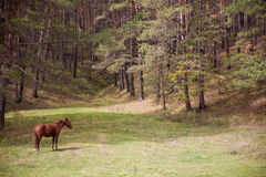 Pferde im Wald Stockfotografie