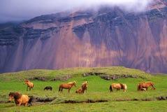 Pferde im wilden Stockbilder