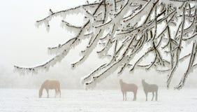 Pferde im Winter Stockfoto