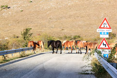 Pferde kreuzen die Straße im Süden von Italien lizenzfreie stockbilder
