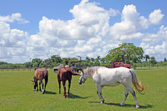 3 Pferde lassen auf einem Gehöft, FL-Bauernhof weiden Stockbild