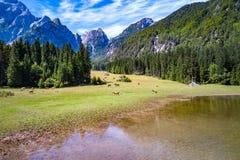 Pferde lassen auf grünem Feld weiden Lake Lago di Fusine Superiore Italien Stockbilder