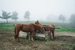 Pferde lassen in den Bergen, Natur, Viehbestand, Tiere weiden Lizenzfreies Stockfoto