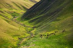 Pferde lassen in den Bergen weiden Stockfoto