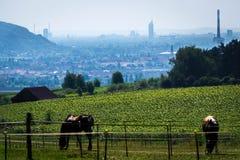 Pferde mit großem Panorama Lizenzfreies Stockbild
