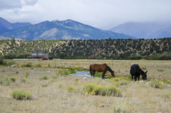 Pferde mit Landschaft und Bergen Stockfoto