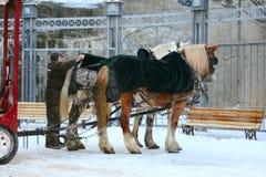 Pferde mit Lastwagen im Winter Lizenzfreie Stockfotos
