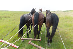 Pferde mit Neigungsauto an der Küste Lizenzfreie Stockfotos