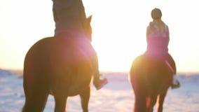 Pferde mit Reitern und dem Winter bei Sonnenuntergang, Nahaufnahme Sch?nes Pferd mit einem Reiter im Winter, Zeitlupe schie?en stock footage