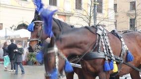 Pferde mit Wagen auf dem Hauptmarktplatz in Krakau stock video footage