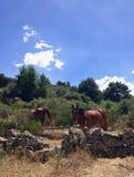 Pferde mitten in der Wiese stockfotografie